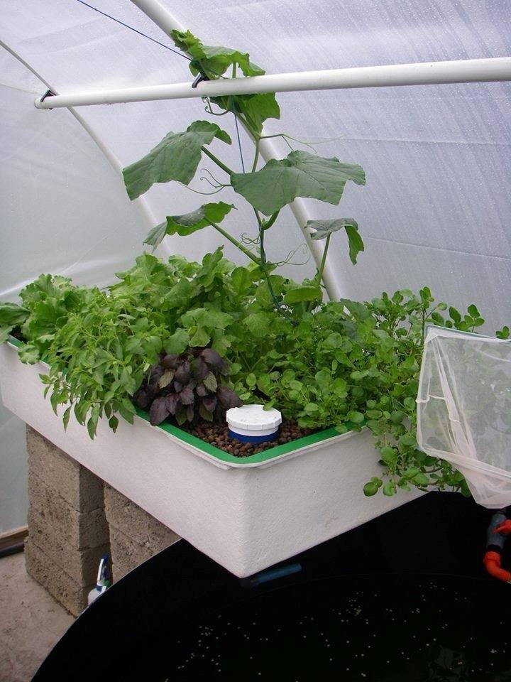 Training Courses & Seminars in South Africa | Aquaponics Innovations