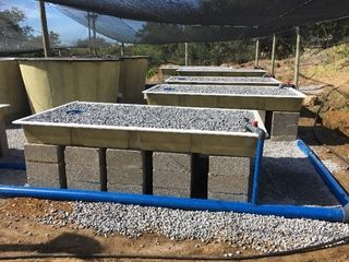 mid sized aquaponics system south africa002