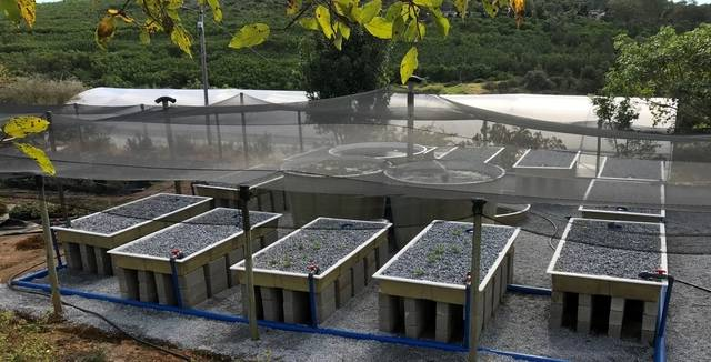 Mid-sized-aquaponics-system-south-africa000